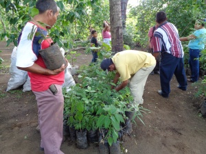 Selecting trees from La Mariposa tree nursery to plant out in the communities