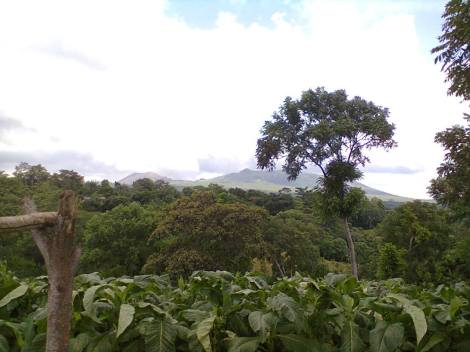 View of the Masaya Volcano from a tobacco farm. You will see the mixture of types of small scale agriculture, of which this is one example. We can see, in season, how different crops like tobacco and coffee are processed.