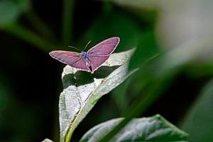 XS 20141113 butterfly 5a