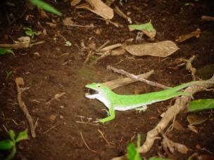 Biodiversity in La Mariposa (5)