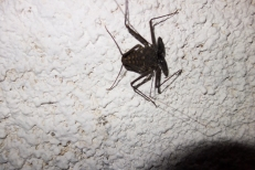 Whip Scorpion - it's harmless