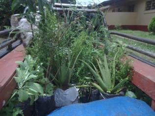 Medicinal garden 2