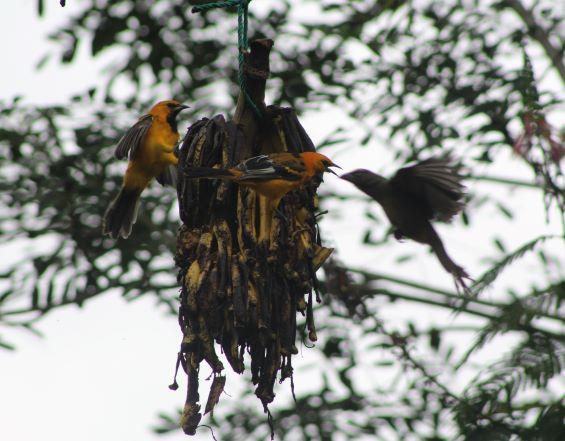 Birds and bananas!
